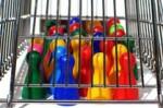 morley cage