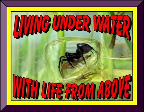 underwater 1.png