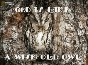 wise owl_1.17.14